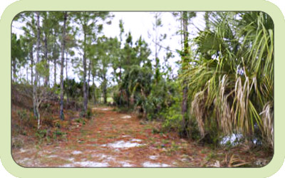 A dirt path through a forest in Charlotte County Florida