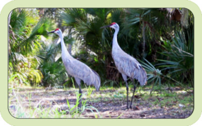Two native birds in Charlotte County