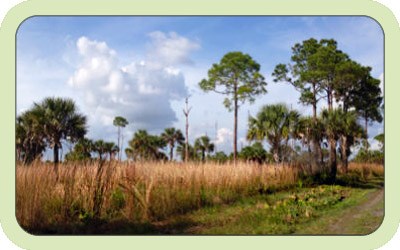 Beautiful Charlotte County ecosystem